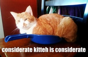 considerate kitteh is considerate