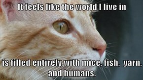 It feels like the world I live in  is filled entirely with mice, fish,  yarn, and humans.