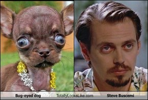 Bug-eyed dog Totally Looks Like Steve Buscemi