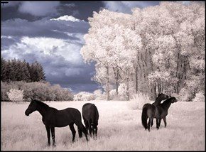 Beautiful Daytime Digital Infrared Photo
