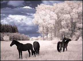 Beautiful Daytime Digital Infrared Photo