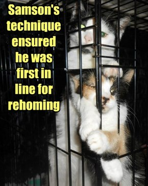 Samson's technique ensured he was first in line for rehoming