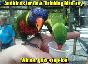 "Auditions for new ""Drinking Bird"" toy."