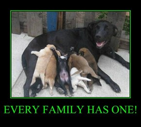 EVERY FAMILY HAS ONE!