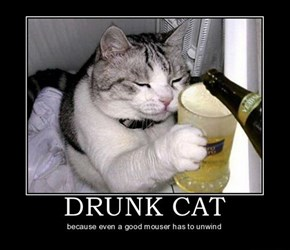 Damn Cat's Drunk Again