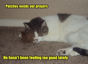 Patches is molly-mommy's little boy