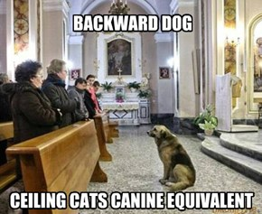Barking to the choir