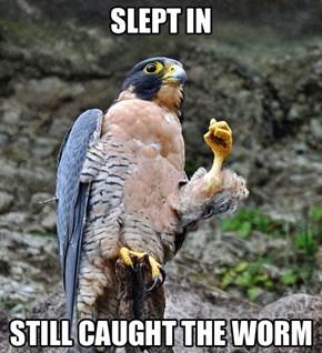 Success Falcon