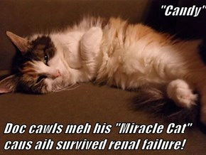 """Candy""  Doc cawls meh his ""Miracle Cat"" caus aih survived renal failure!"