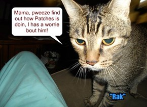 Mama, pweeze find out how Patches is doin, I has a worrie bout him!