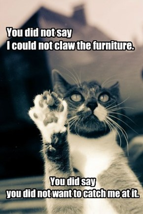 You did not say I could not claw the furniture.