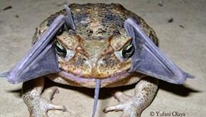 Toads Eat Bats?