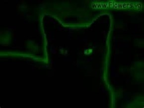 Very Cool Night Vision Infrared Black cat