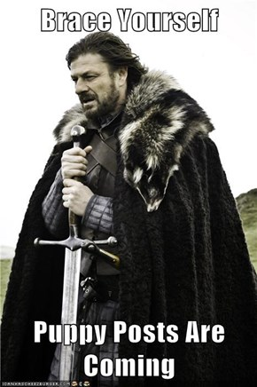 Brace Yourself  Puppy Posts Are Coming