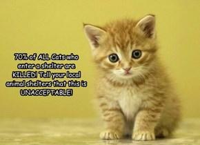 Stop Killing Cats!