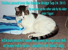 We'll miss yu, Patches. May you have unlimited catnip-skwirrls to play with