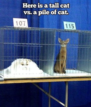 Mommy, I Want the Pile of Cat to Win!