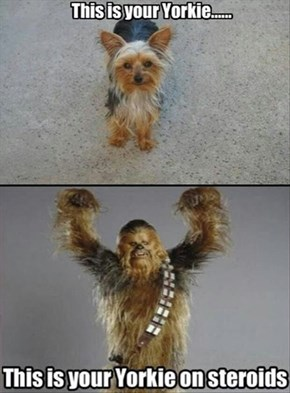 No More Chewie Treats