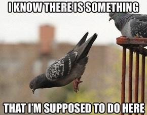 I Just Can't Put my Beak on it