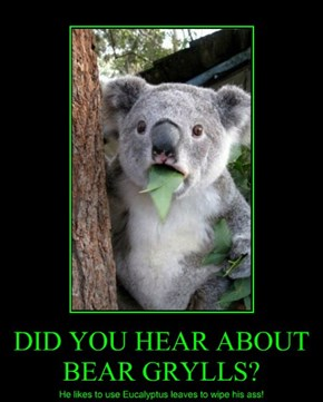 DID YOU HEAR ABOUT BEAR GRYLLS?