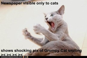 Newspaper visible only to cats   shows shocking pix of Grumpy Cat smiling  >< >< >< ><