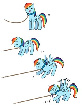 NObody Puts Dashie On A Leash