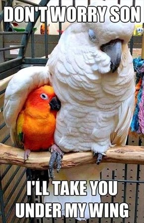 Even if You Ruffle My Feathers Sometimes