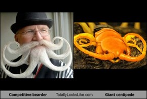 Competitive bearder Totally Looks Like Giant centipede