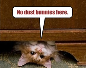No dust bunnies here.