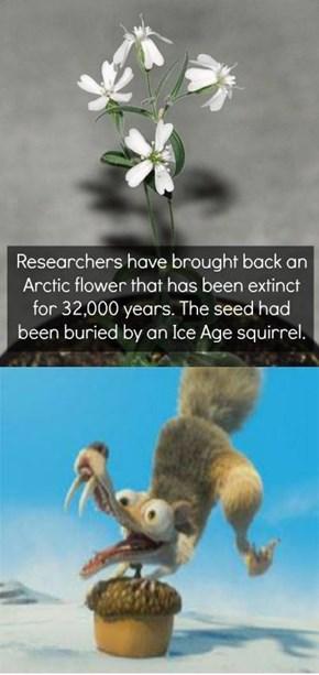 Scrat's flower