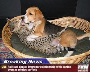 Breaking News - Politicat denies improper relationship with canine even as photos surface