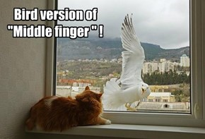 "Bird version of ""Middle finger "" !"