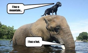 I haz a hat.