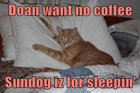 Doan want no coffee  Sundog iz for sleepin'