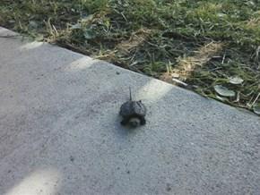 Tiny Snapper