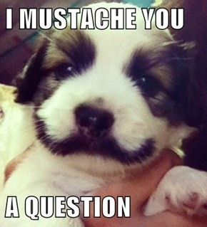 The Answer's Yes, You're Beardiful