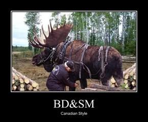 BD&SM