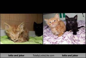 lotto and joker Totally Looks Like lotto and joker