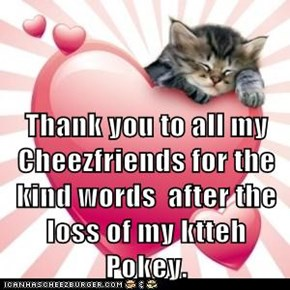 Thank you to all my Cheezfriends for the kind words  after the loss of my ktteh Pokey.