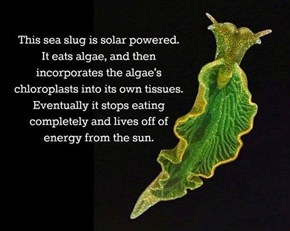 Sea Slugs Are Weird