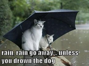 rain, rain go away... unless you drown the dog
