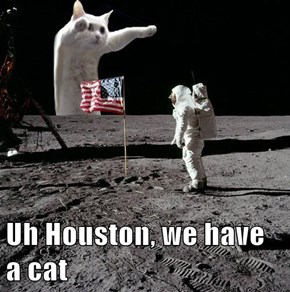 Uh Houston, we have a cat