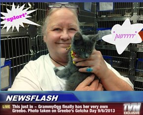 NEWSFLASH - This just in ~ GrammyOgg finally has her very own Greebo. Photo taken on Greebo's Gotcha Day 9/6/2013
