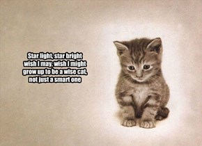 Star light, star bright wish I may, wish I might grow up to be a wise cat, not just a smart one