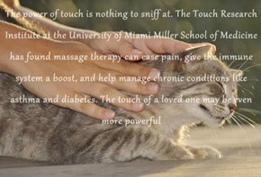 The power of touch is nothing to sniff at. The Touch Research Institute at the University of Miami Miller School of Medicine has found massage therapy can ease pain, give the immune system a boost, and help manage chronic conditions like asthma and diabet