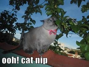 ooh! cat nip