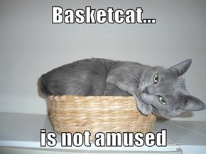 Basketcat...  is not amused
