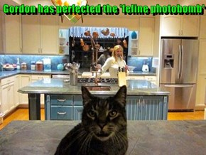 Gordon has perfected the 'feline photobomb'
