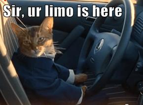 Sir, ur limo is here