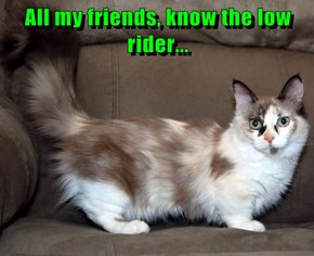All my friends, know the low rider...